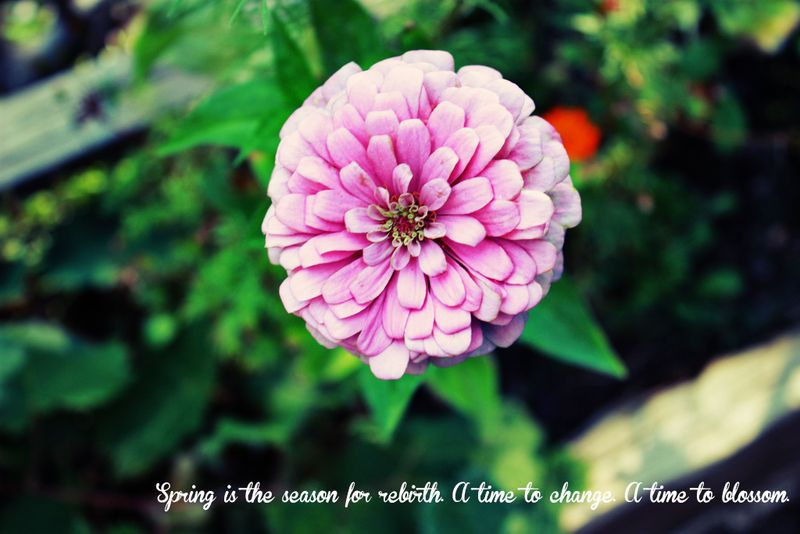 Spring-is-here